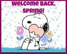 Welcome back spring spring snoopy spring quotes hello spring welcome back spring snoopy spring quotes