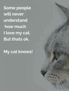 ❤️ my cat