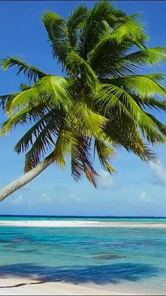 Strand Wallpaper, Beach Wallpaper, Screen Wallpaper, Wallpaper Quotes, Beach Pictures, Nature Pictures, Palm Trees Beach, Tropical Beaches, Ocean Beach