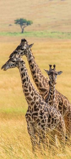 Nature Animals, Baby Animals, Funny Animals, Cute Animals, African Animals, African Safari, Rhino Pictures, Wild Animals Photography, Wild Animals Photos