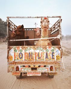 Great photograph by Helene Sandberg - Pushkar IV