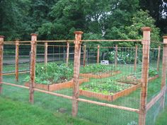 Garden fence for a raised bed garden. Notice the chicken wire at the bottom portion of the fence.  This will keep small critters out.