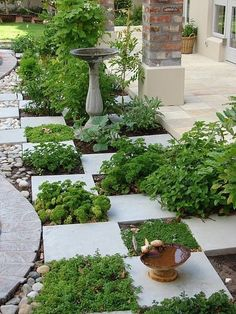 great way to do an herb garden or just an area of flowers to the side of a patio of pavers. can also use low ground cover in spaces and do a whole patio like this. #ingroundvegetablegardeningideas