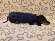 Navy blue knit sweater for dachshunds or small dogs,handmade knitted dog sweater, handmade knitted sweater for dachshund | dachshundknit