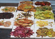 Leaf Monoprint Process Cassandra Tondro Green Art Blog