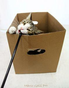© copyright Marco. Con Gatto Poldo. Galli Marco il  fotografo dei gatti