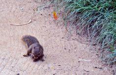 Amigo esquilo