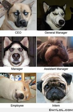 Not sure why, but this made me laugh. The organizational structure