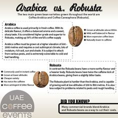 Coffee Knowledge Essentials   The difference between Arabica and Robusta
