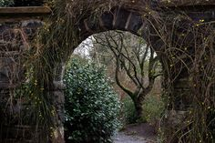 Find images and videos about nature, aesthetic and tree on We Heart It - the app to get lost in what you love. Storyboard, Elf Rogue, Story Inspiration, Character Inspiration, Faeries, Fairy Tales, Scenery, Castle, Pictures