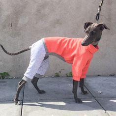 italian greyhound clothing - jumpsuit. available on etsy
