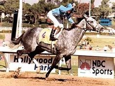 Princess Rooney(1980)(Filly) Verbatim- Parrish Princess By Drone. 4x4 To Nasrullah, 4x5 To Princequillo, 5(F)x5(F) To Blue Larkspur. 21 Starts 17 Wins 2 Seconds 1 Third. Won BC Distaff (G1), Ky Oaks(G1), Frizette S(G1), Vanity Inv H(G1), Spinster H(G1), Ashland S(G2), Gardenia S(G2), Chaula Vista H(G3), Susan's Girl S, 2nd Acorn S(G1), Milady S(G2), 3rd Hawthorne H(G2). Died In 2008.