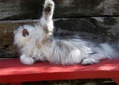 Click to see 16 kitties that should be nominated for an Academy award!