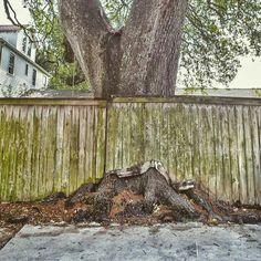 10 Best Fence Around Tree Images