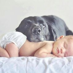 Inspiration for newborn and dog photos. Newborn And Dog, Newborn Shoot, Baby Dogs, Doggies, Baby Baby, Puppies With Babies, Babies With Dogs, Babies Pics, Buy Puppies