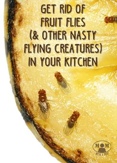 Does it seem like summer bring a swarm of fruit flies and other nasty flying creatures in your kitchen, either messing with all of your ripening fruit or in your drains? Here are some ways to get rid of those pesky little creatures...