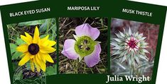 """""""Discover a Colorado Wildflower"""" card deck by Julia Wright Card Deck, Deck Of Cards, Colorado Wildflowers, Black Eyed Susan, Wild Flowers, Lily, Artist, Plants, Blog"""