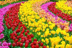 花畑 ヨーロッパ - Google 検索