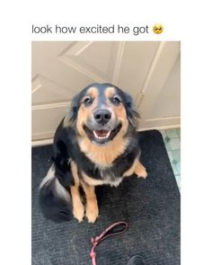 This is accurate 😀😀 Via insta: - Funny dogs video Funny Animal Jokes, Funny Dog Memes, Funny Dog Videos, Funny Animal Pictures, Animal Memes, Pet Videos, Cute Funny Dogs, Cute Funny Animals, Cute Animal Videos