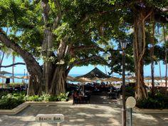 モアナサーフライダー Hawaii Pics, Hawaii Pictures, Moana Surfrider, Places, Lugares