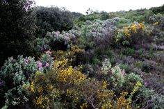 Garrigue in Provence