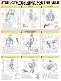 arm workout strength training arms