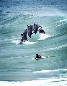 Learn to surf in Australia. Visit Seven Mile Beach, Byron Bay and Sydney with surf camps of different lengths. Our surf lessons are fully inclusive and fun. No Wave, Beautiful Creatures, Animals Beautiful, Cute Animals, Waves, Tier Fotos, Mundo Animal, Surfs Up, Whales