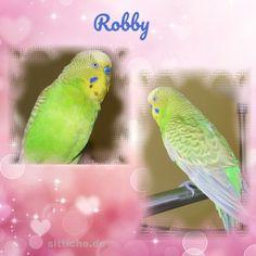 Opa Robby - der Boss - Wellensittich Forum und Galerie fuer Wellensittich-Freunde Parrot, Bird, Animals, Budgies, Friends, Parrot Bird, Animales, Animaux, Birds