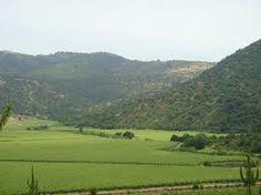 Bosque Mediterraneo de Chile