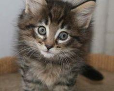 Hi Lisa.  My name is fluffy.