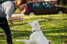 72 Best Assistance Dog Stuff Images Service Dog Training Service