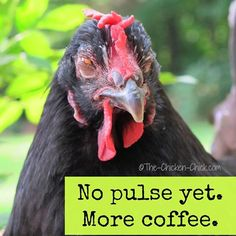 Coffee and chickens