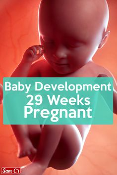What does my baby look like at 29 weeks pregnant? - At 29 weeks pregnant. Your baby is getting chubbier by the week and is getting more cramped in your - Baby Im Mutterleib, Baby Kind, Baby Week By Week, Baby Size By Week, 29 Weeks Pregnant, Pregnant Baby, Baby In Womb, Baby Weeks, Baby Potty