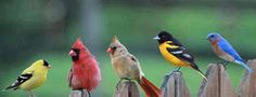 Mindblowing Planet Earth: Lovely Birds sitting in a row