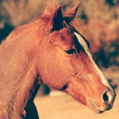Equestrian ♡