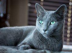 Beautiful eyes, beautiful kitty