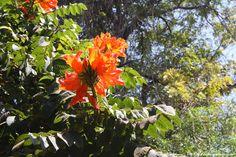 mto wa mbu orange flower