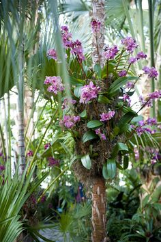 MustDocom Must Do Visitor Guides Colorful orchid display at