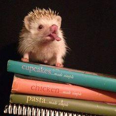 morning star hedgehogs @mshedgehogs Instagram photos | Websta (Webstagram)