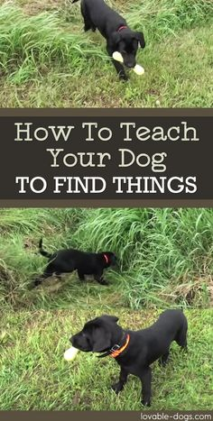 How To Teach Your Dog To Find Things ►► http://lovable-dogs.com/how-to-teach-your-dog-to-find-things/?i=p