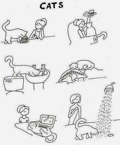 Gatos: é bem assim...
