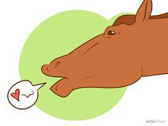 How to understand what your horse is communicating