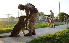 Military dogs need homes after their service is over military dog adoptions Military Working Dogs, Military Dogs, Police Dogs, Rescue Dogs, Animal Rescue, Dog Soldiers, Malinois, War Dogs, Therapy Dogs