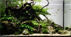 2013 AGA Aquascaping Contest - Entry #591