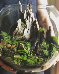Terrarium Scene, Terrarium Plants, Succulent Terrarium, Succulents Garden, Fairy Terrarium, Terrarium Ideas, Water Terrarium, Bottle Garden, Glass Garden