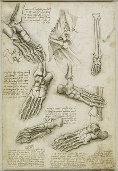 Leonardo da Vinci Anatomy References - Daily Art