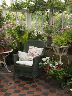 North facing conservatory with collection of pelargoniums, and wicker chairs for sitting in the cool in the summer.  © Nicola Stocken Tomkins. Countryside May 2013.