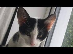 KITTENS - YouTube Kittens, Cats, Resident Evil, Art World, Youtube, Action, Animals, Cute Kittens, Gatos