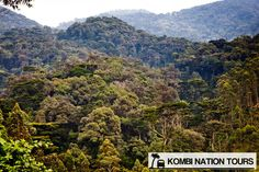 Bwindi Impenetrable National Park! For more information on Uganda's National Parks and Reserves, please visit our website.