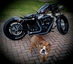 The Dog by his 48..